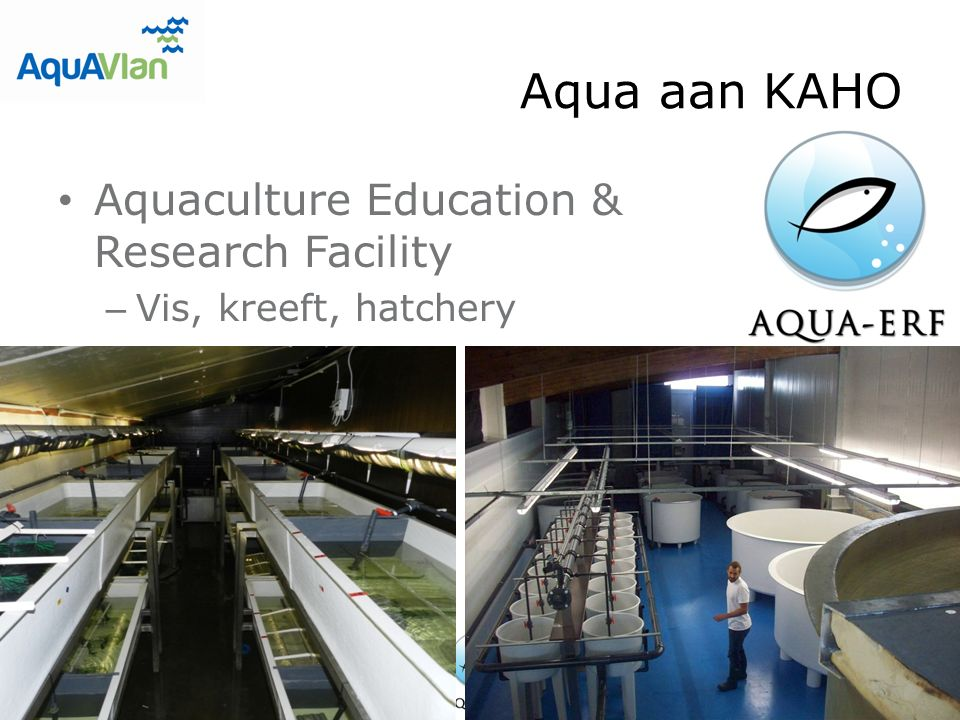 Aqua aan KAHO Aquaculture Education & Research Facility – Vis, kreeft, hatchery
