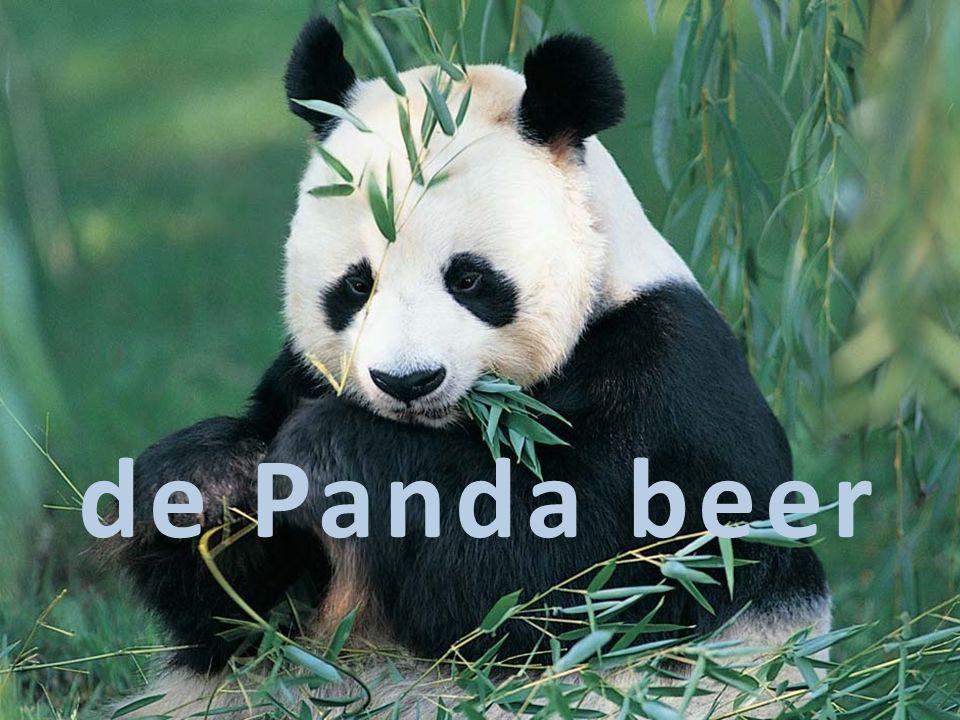 de Panda beer