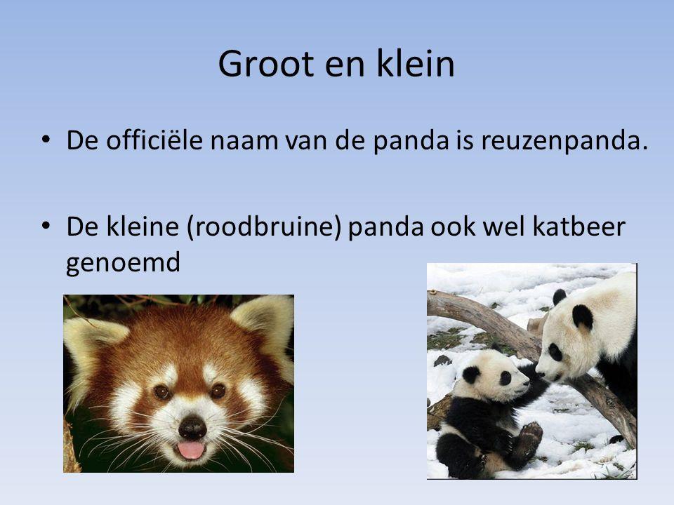 Groot en klein De officiële naam van de panda is reuzenpanda. De kleine (roodbruine) panda ook wel katbeer genoemd