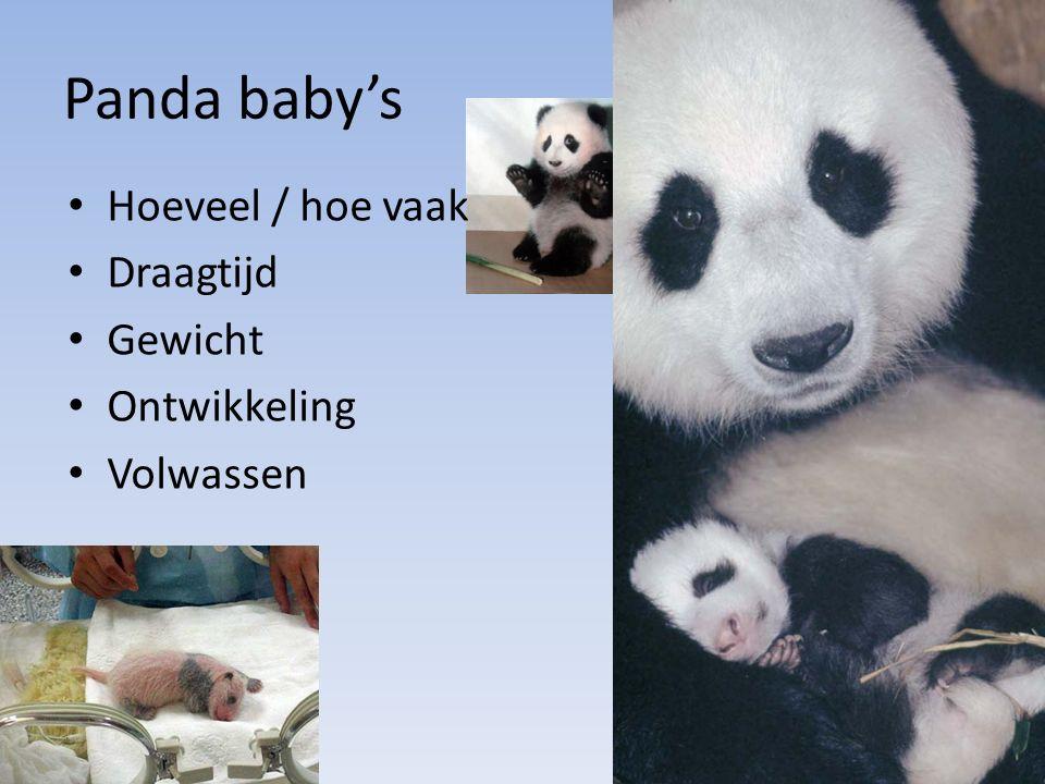 Panda baby's Hoeveel / hoe vaak Draagtijd Gewicht Ontwikkeling Volwassen