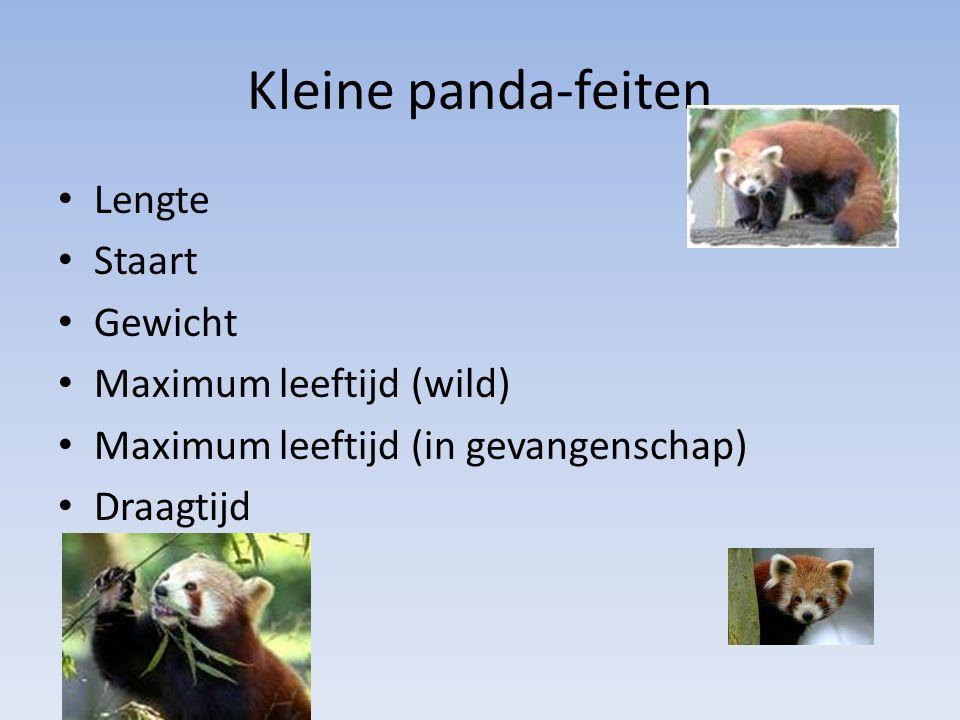 Kleine panda-feiten Lengte Staart Gewicht Maximum leeftijd (wild) Maximum leeftijd (in gevangenschap) Draagtijd