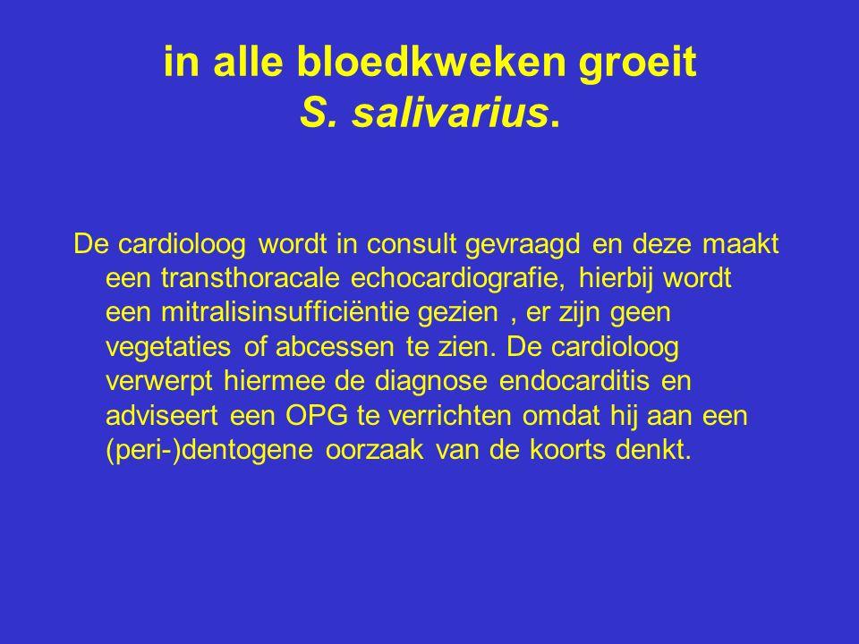 in alle bloedkweken groeit S. salivarius. De cardioloog wordt in consult gevraagd en deze maakt een transthoracale echocardiografie, hierbij wordt een