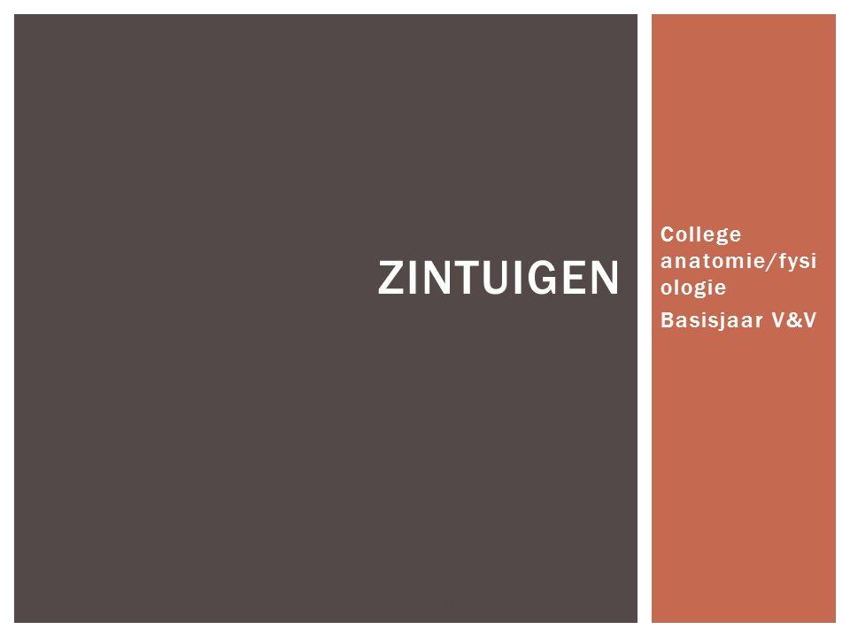 College anatomie/fysi ologie Basisjaar V&V J Bügel Noorderpoortcollege Winschoten ZINTUIGEN