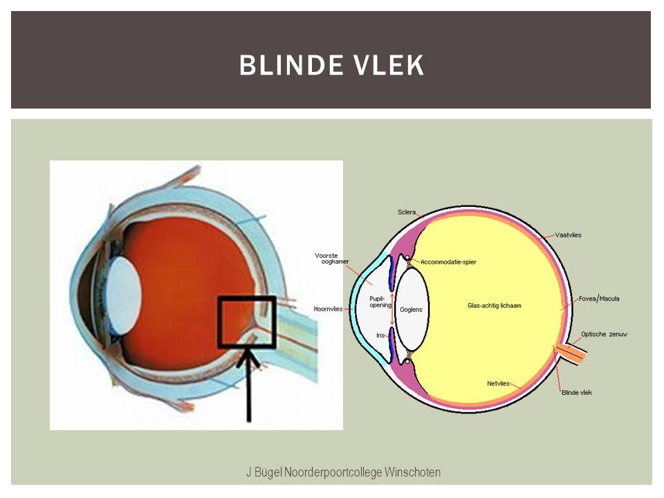 J Bügel Noorderpoortcollege Winschoten BLINDE VLEK