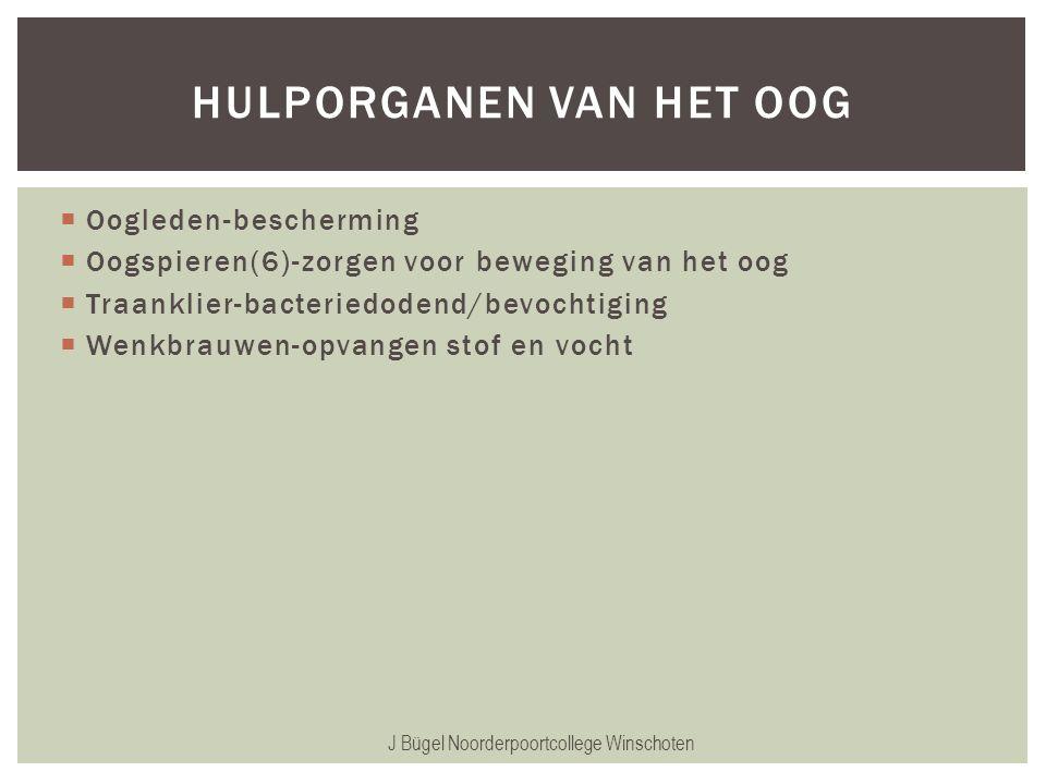  Oogleden-bescherming  Oogspieren(6)-zorgen voor beweging van het oog  Traanklier-bacteriedodend/bevochtiging  Wenkbrauwen-opvangen stof en vocht