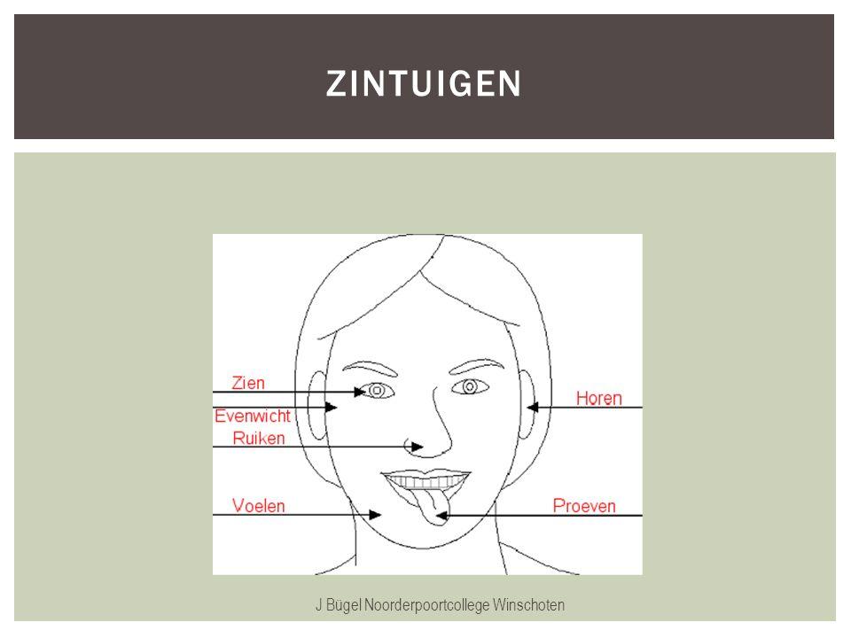 J Bügel Noorderpoortcollege Winschoten ZINTUIGEN