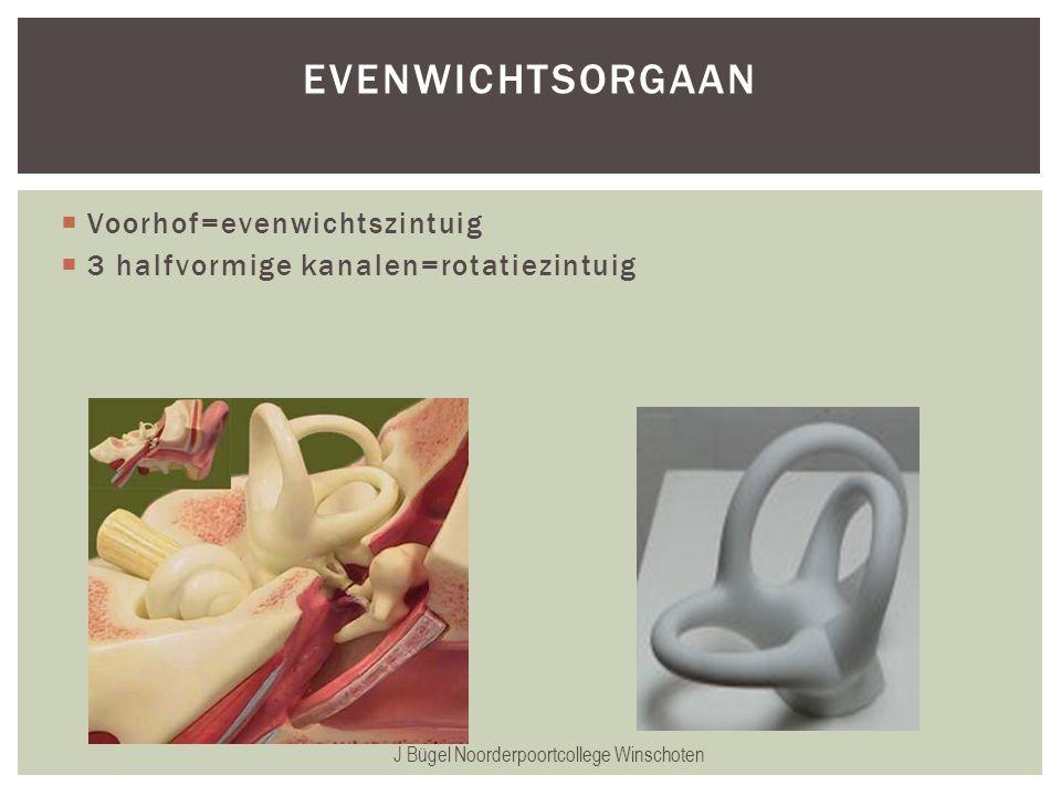  Voorhof=evenwichtszintuig  3 halfvormige kanalen=rotatiezintuig J Bügel Noorderpoortcollege Winschoten EVENWICHTSORGAAN