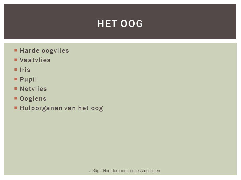 J Bügel Noorderpoortcollege Winschoten HET OOG