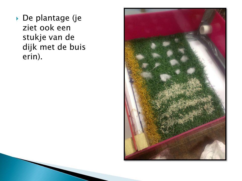  De plantage (je ziet ook een stukje van de dijk met de buis erin).