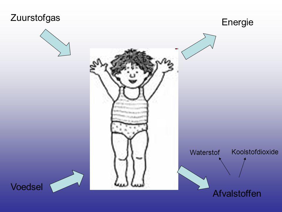Zuurstofgas Voedsel Energie Afvalstoffen Koolstofdioxide Waterstof