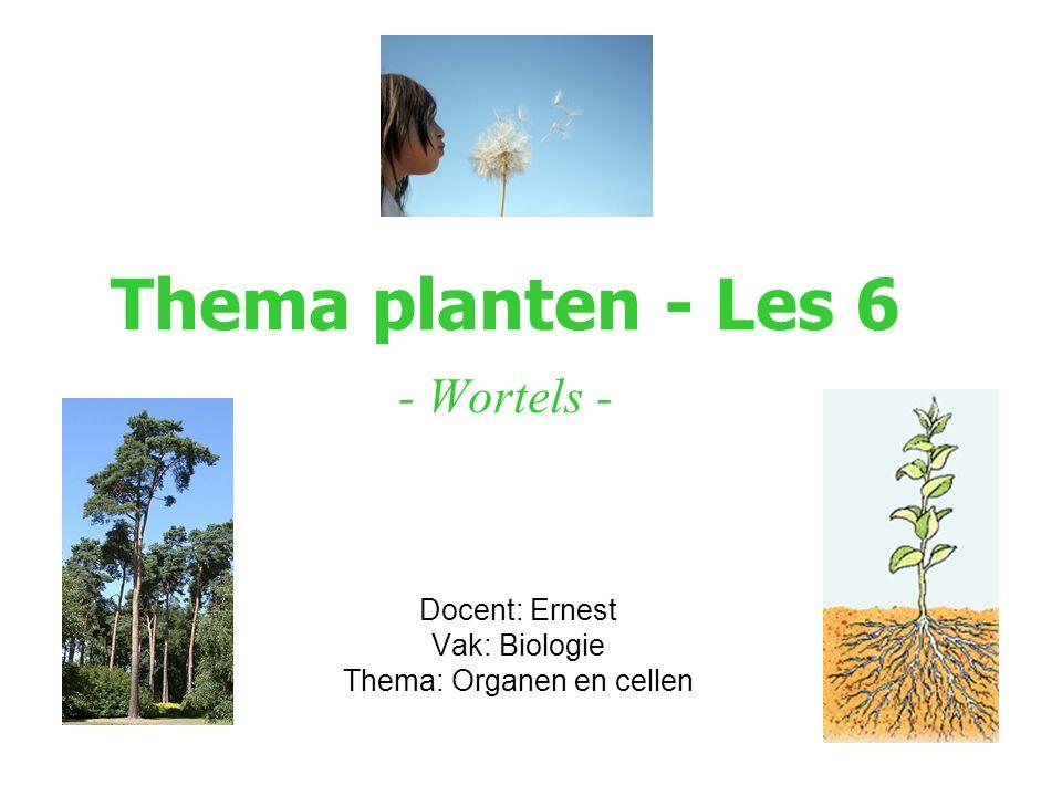 Thema planten - Les 6 - Wortels - Docent: Ernest Vak: Biologie Thema: Organen en cellen