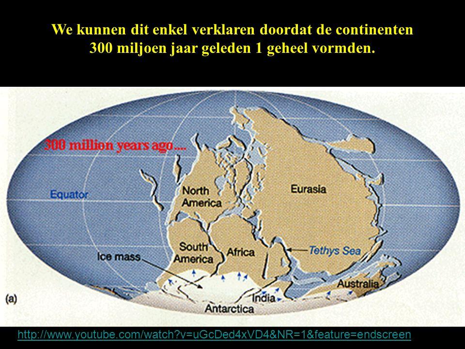 We kunnen dit enkel verklaren doordat de continenten 300 miljoen jaar geleden 1 geheel vormden. http://www.youtube.com/watch?v=uGcDed4xVD4&NR=1&featur