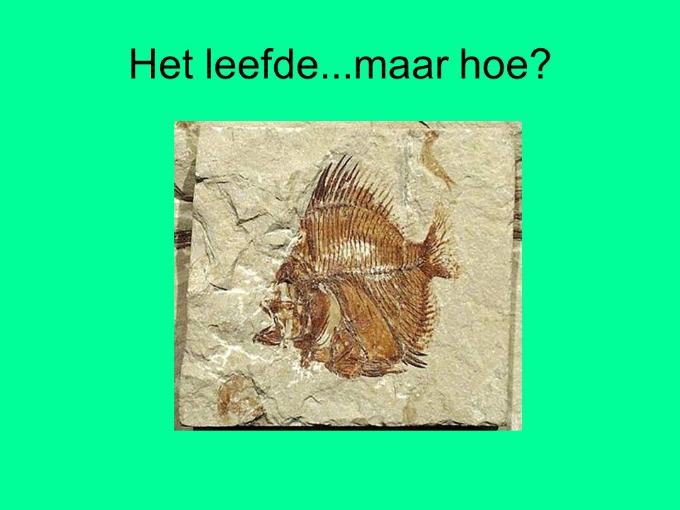 Het leefde...maar hoe!? Opdracht: maak een reconstructie van dit fossiel.
