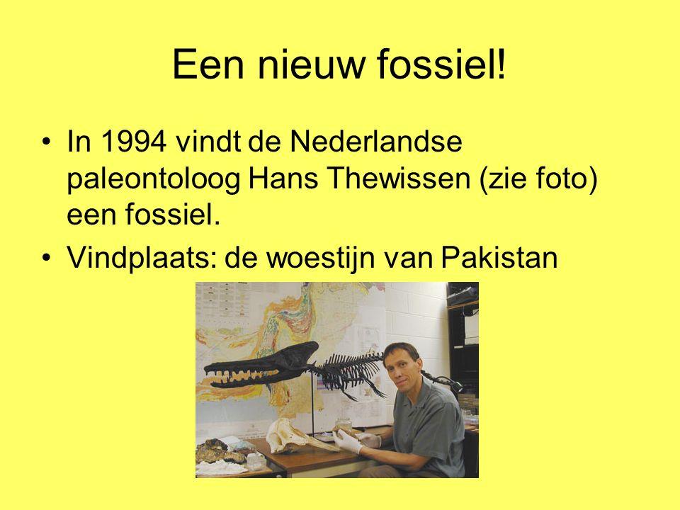 Een nieuw fossiel! In 1994 vindt de Nederlandse paleontoloog Hans Thewissen (zie foto) een fossiel. Vindplaats: de woestijn van Pakistan