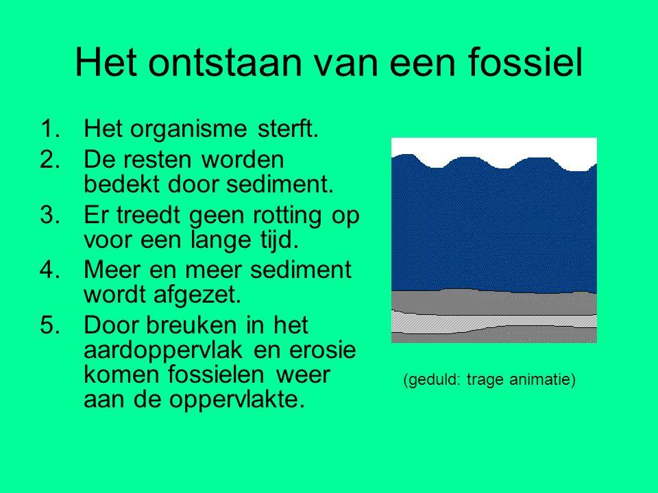 Het ontstaan van een fossiel 1.Het organisme sterft. 2.De resten worden bedekt door sediment. 3.Er treedt geen rotting op voor een lange tijd. 4.Meer