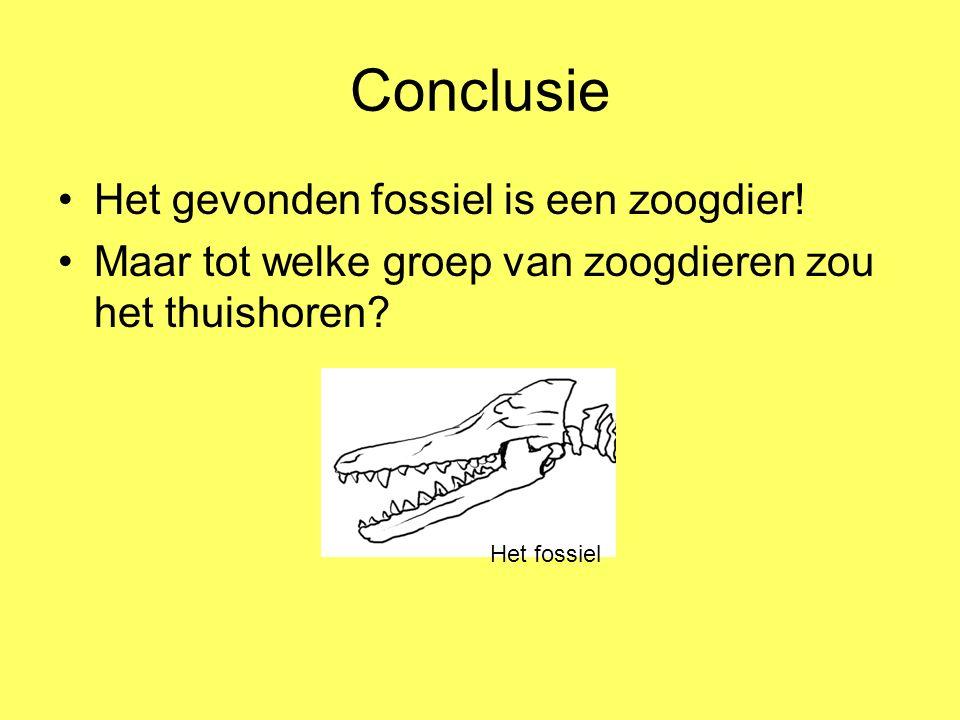 Conclusie Het gevonden fossiel is een zoogdier! Maar tot welke groep van zoogdieren zou het thuishoren? Het fossiel