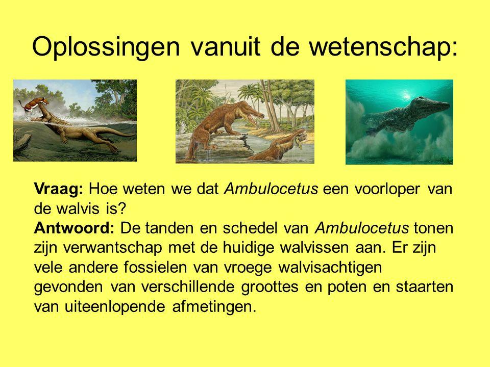Oplossingen vanuit de wetenschap: Vraag: Hoe weten we dat Ambulocetus een voorloper van de walvis is? Antwoord: De tanden en schedel van Ambulocetus t
