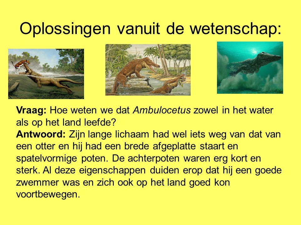 Oplossingen vanuit de wetenschap: Vraag: Hoe weten we dat Ambulocetus zowel in het water als op het land leefde? Antwoord: Zijn lange lichaam had wel