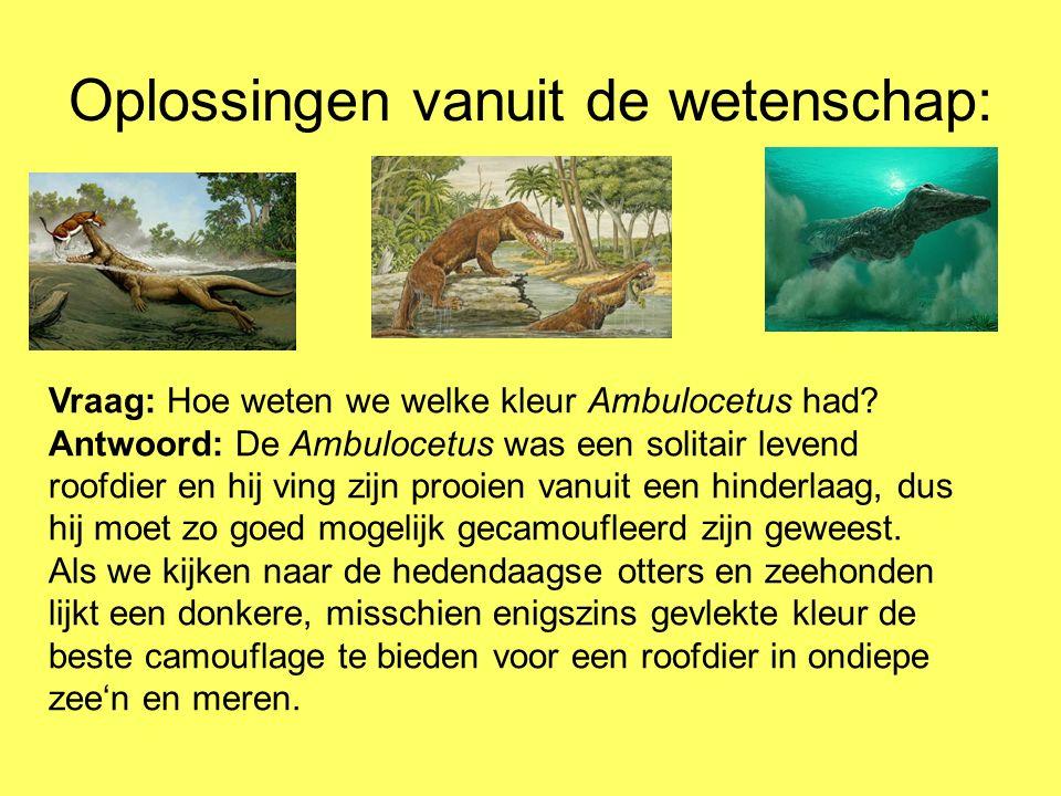 Oplossingen vanuit de wetenschap: Vraag: Hoe weten we welke kleur Ambulocetus had? Antwoord: De Ambulocetus was een solitair levend roofdier en hij vi