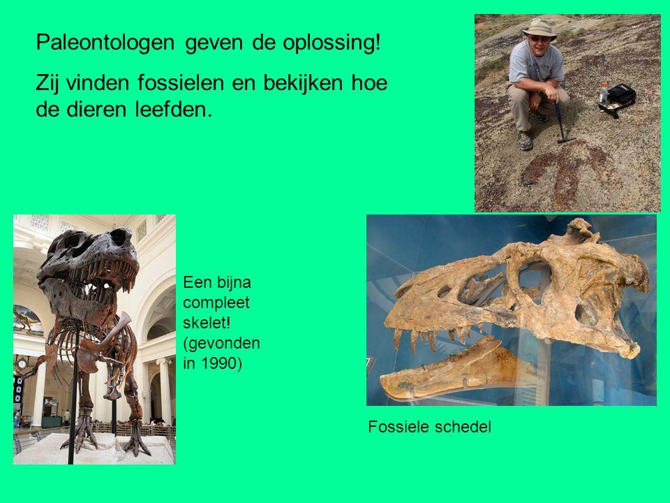 Voetafdrukken van Tyrannosaurus Fossiele schedel Paleontologen geven de oplossing! Zij vinden fossielen en bekijken hoe de dieren leefden. Een bijna c