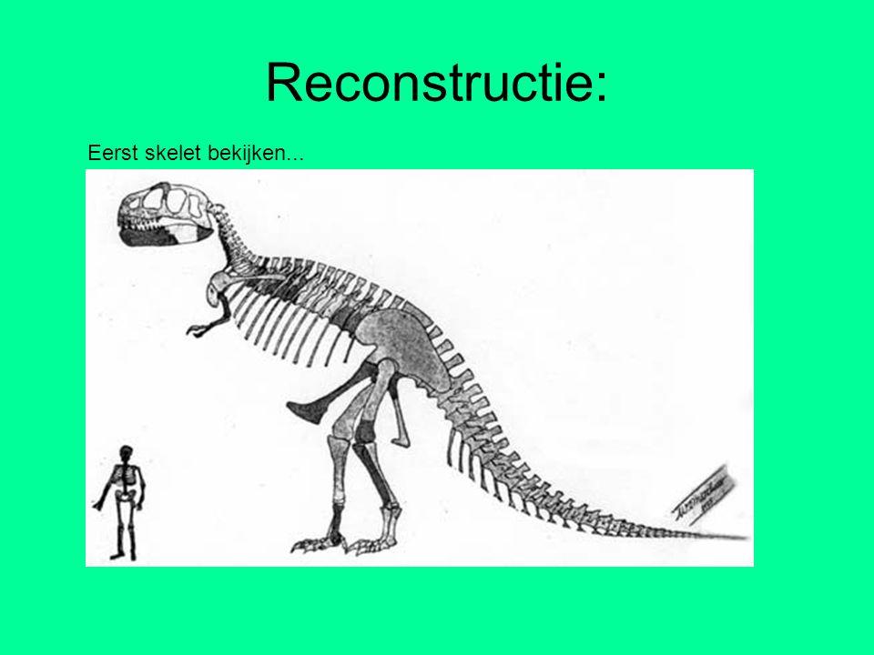 Reconstructie: Eerst skelet bekijken...