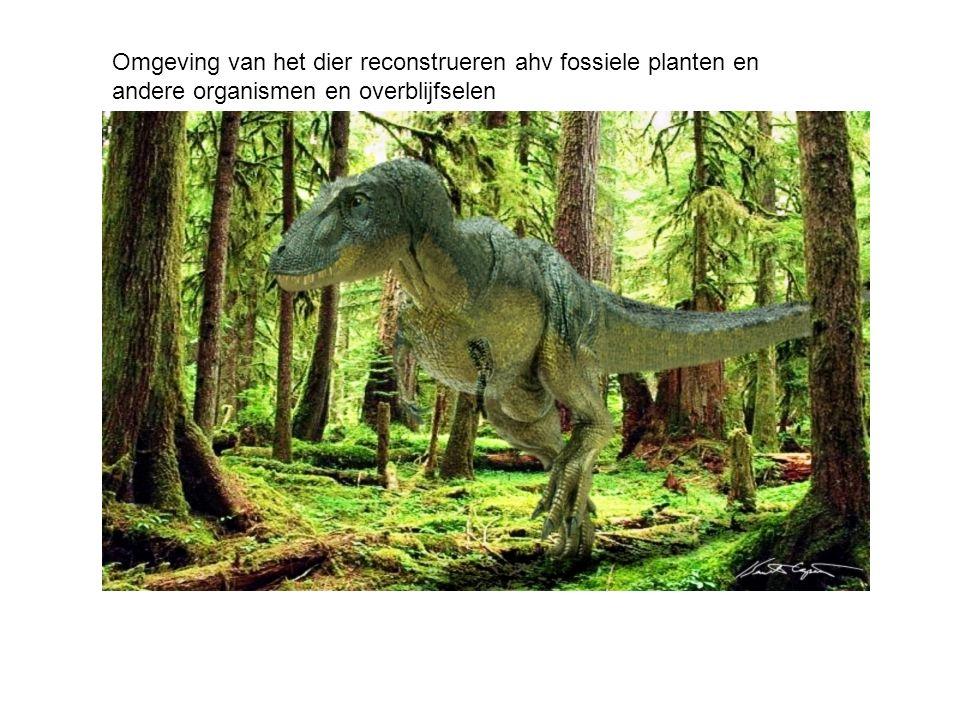 Afleiden uit skelet en omgeving hoe het dier er uit zag