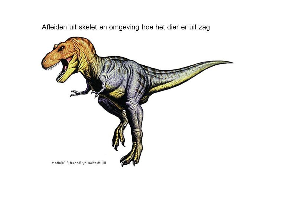 Vragen Hoe leveren fossielen argumenten voor de evolutietheorie.
