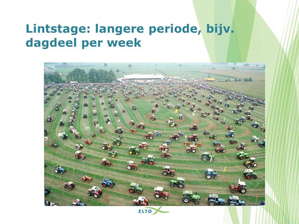 Lintstage: langere periode, bijv. dagdeel per week