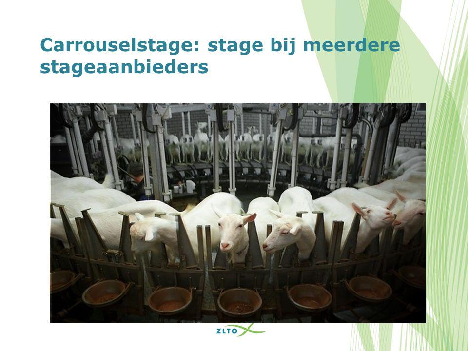 Carrouselstage: stage bij meerdere stageaanbieders
