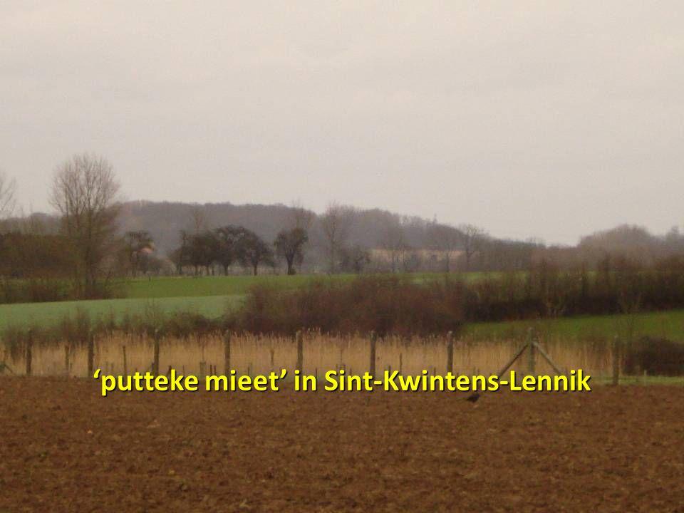 'putteke mieet' in Sint-Kwintens-Lennik