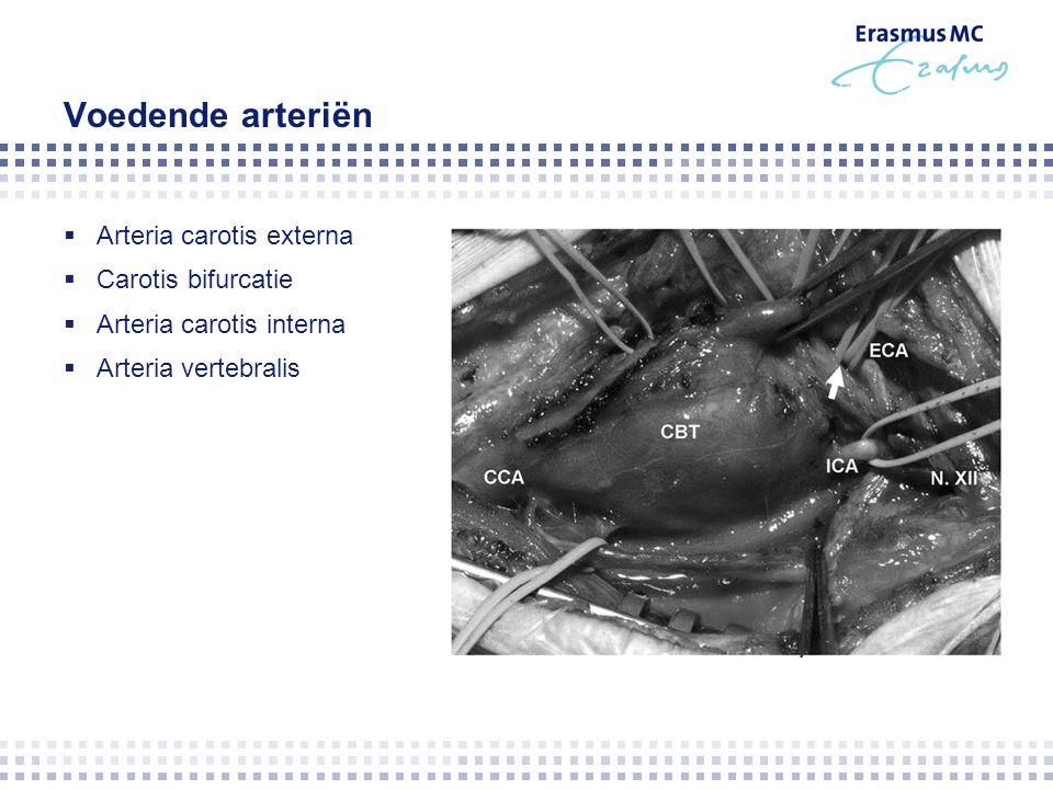 Voedende arteriën  Arteria carotis externa  Carotis bifurcatie  Arteria carotis interna  Arteria vertebralis
