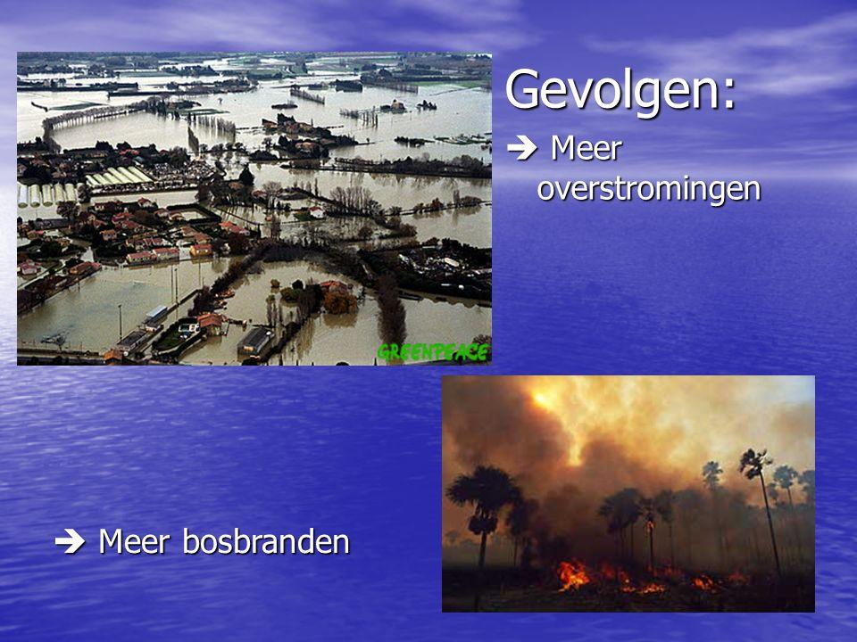 Gevolgen:  Meer overstromingen  Meer bosbranden