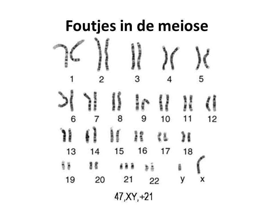 Meiose uitgelegd http://www.youtube.com/watch?v=uh7c8YbYGqo Met crossing over: http://www.youtube.com/watch?v=D1_-mQS_FZ0&NR=1