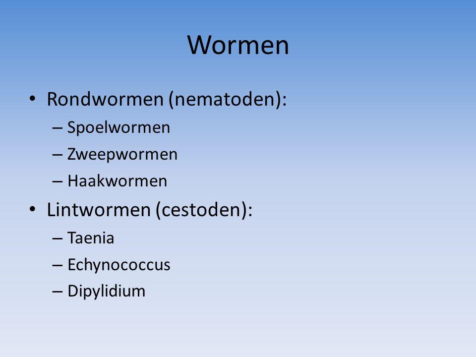 Wormen Rondwormen (nematoden): – Spoelwormen – Zweepwormen – Haakwormen Lintwormen (cestoden): – Taenia – Echynococcus – Dipylidium