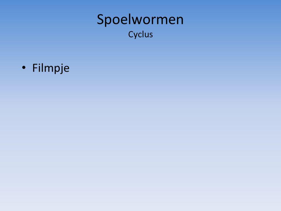 Spoelwormen Cyclus Filmpje