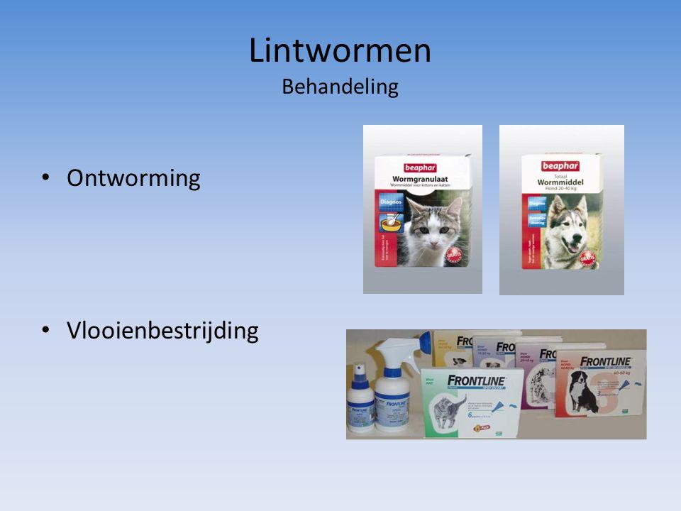 Lintwormen Behandeling Ontworming Vlooienbestrijding