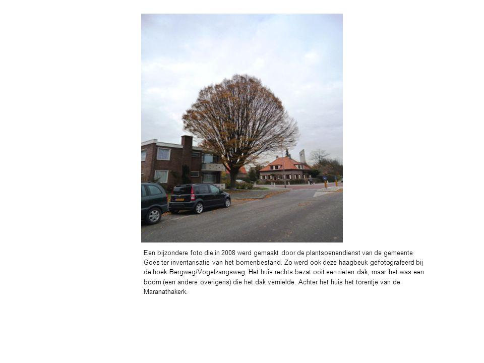 Een bijzondere foto die in 2008 werd gemaakt door de plantsoenendienst van de gemeente Goes ter inventarisatie van het bomenbestand.