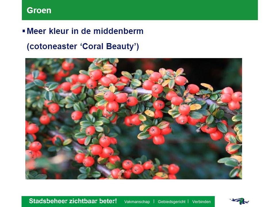 Groen  Meer kleur in de middenberm (cotoneaster 'Coral Beauty')