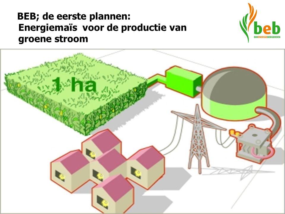BEB; de eerste plannen: Energiemaïs voor de productie van groene stroom