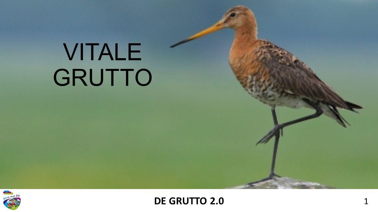 VITALE GRUTTO DE GRUTTO 2.0 1
