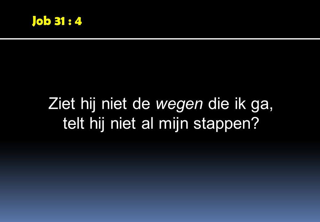 Job 31 : 4 Ziet hij niet de wegen die ik ga, telt hij niet al mijn stappen?