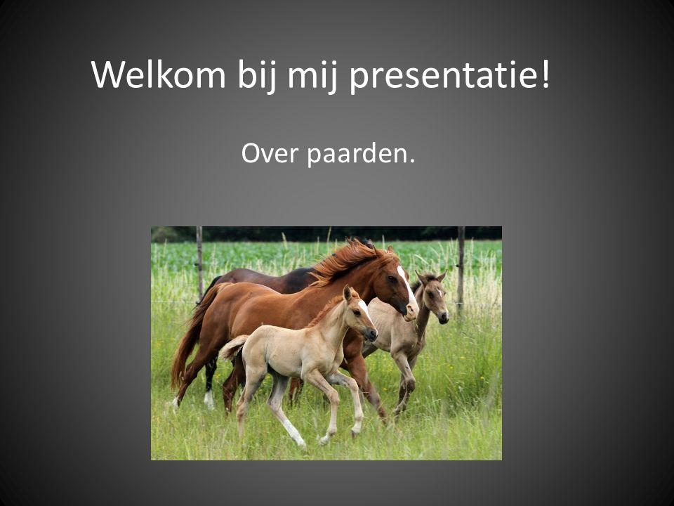 Welkom bij mij presentatie! Over paarden.