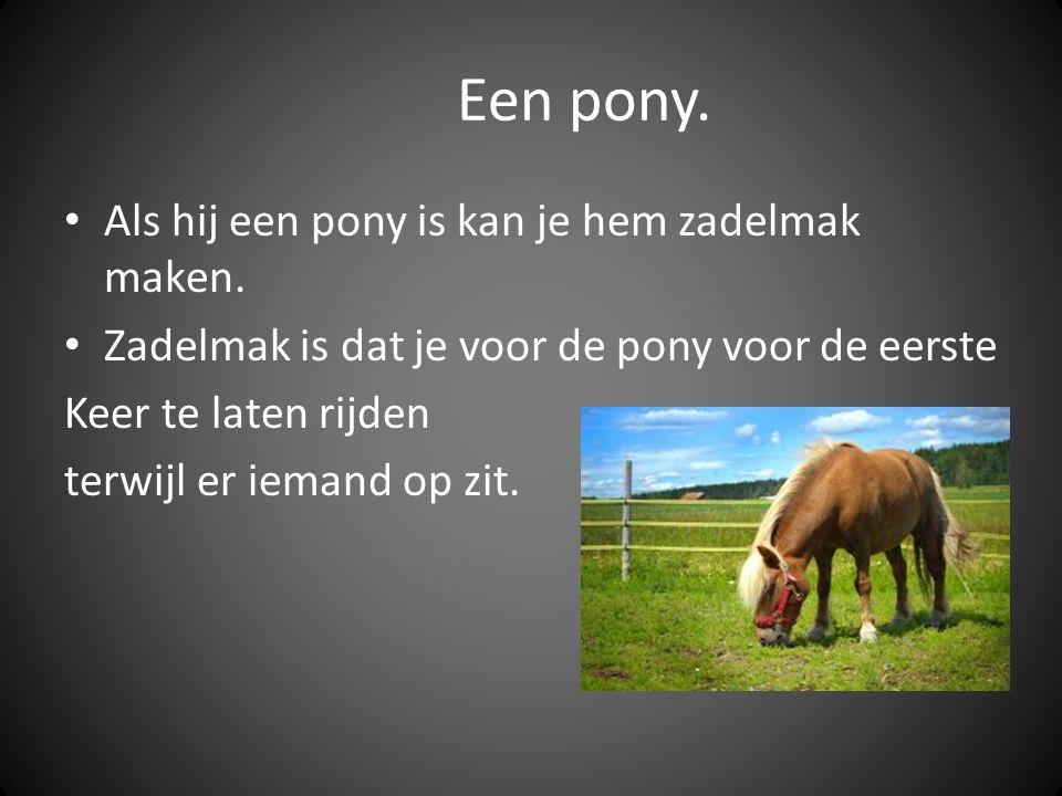Een pony. Als hij een pony is kan je hem zadelmak maken.