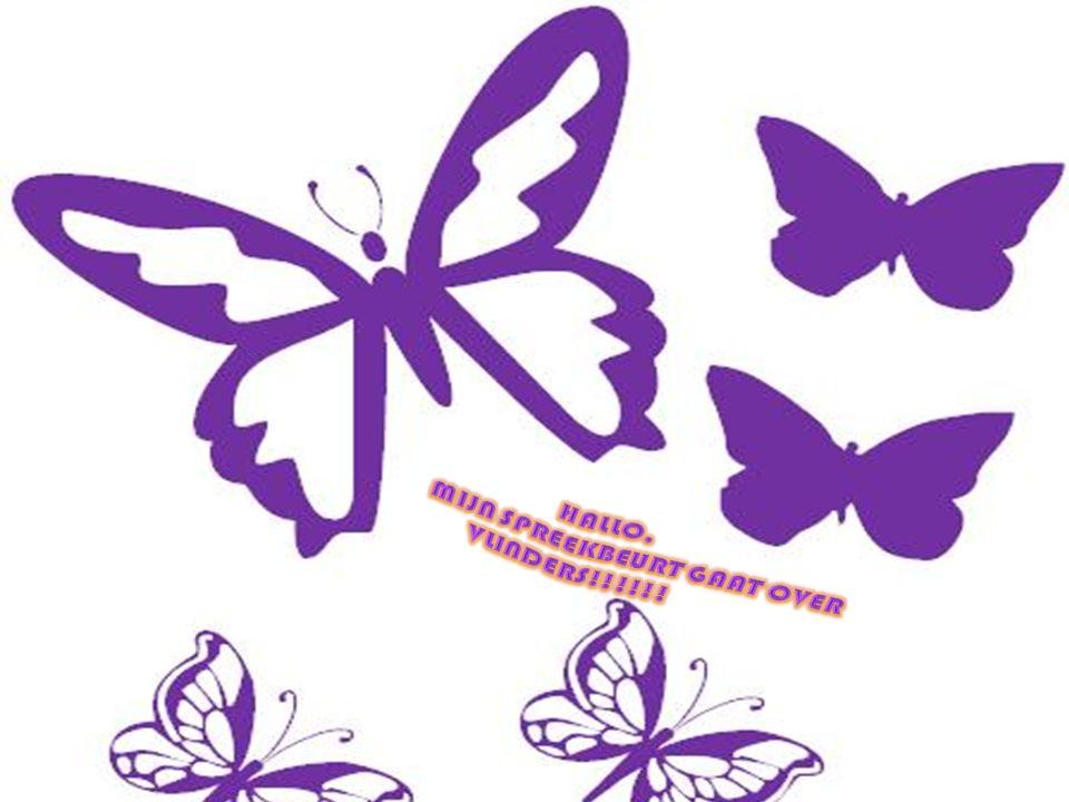 Hallo, Mijn spreekbeurt gaat over vlinders!!!