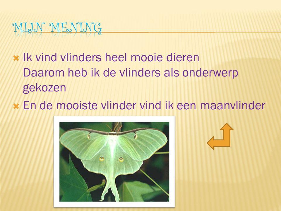  Ik vind vlinders heel mooie dieren Daarom heb ik de vlinders als onderwerp gekozen  En de mooiste vlinder vind ik een maanvlinder