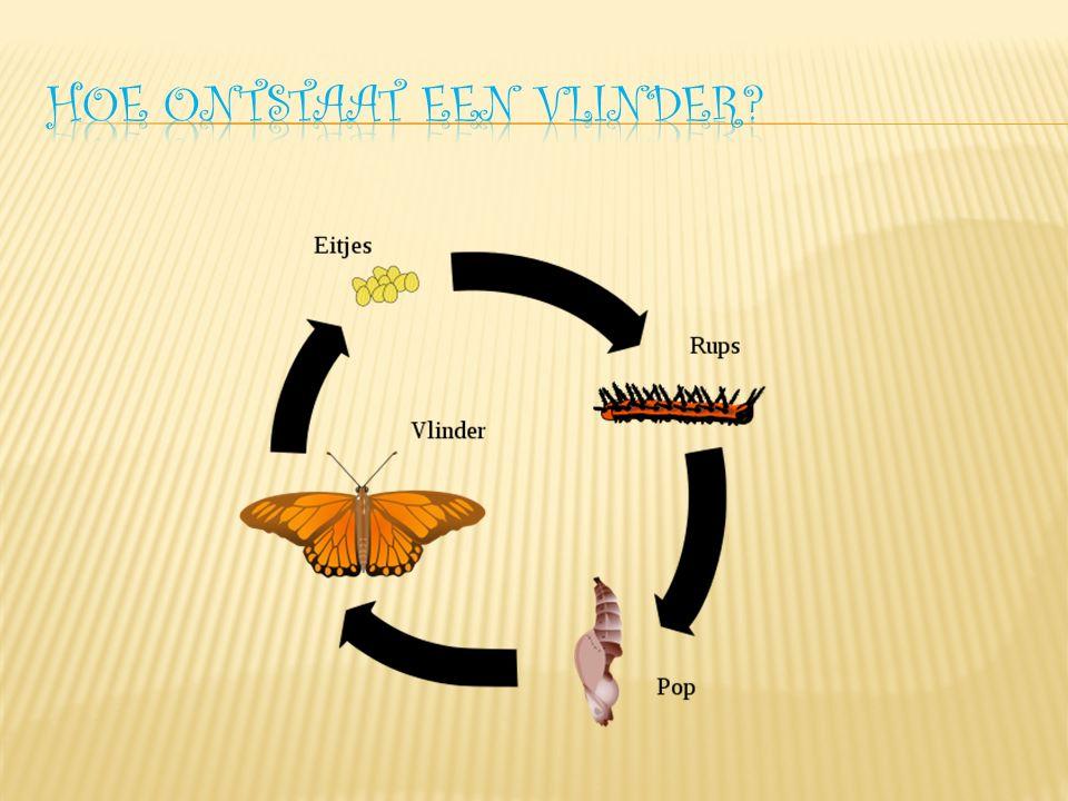  Kijk maar naar deze foto's  En zoek de vlinders