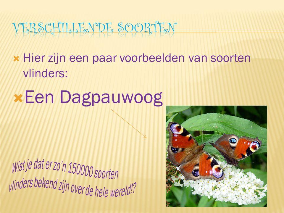  Hier zijn een paar voorbeelden van soorten vlinders:  Een Dagpauwoog
