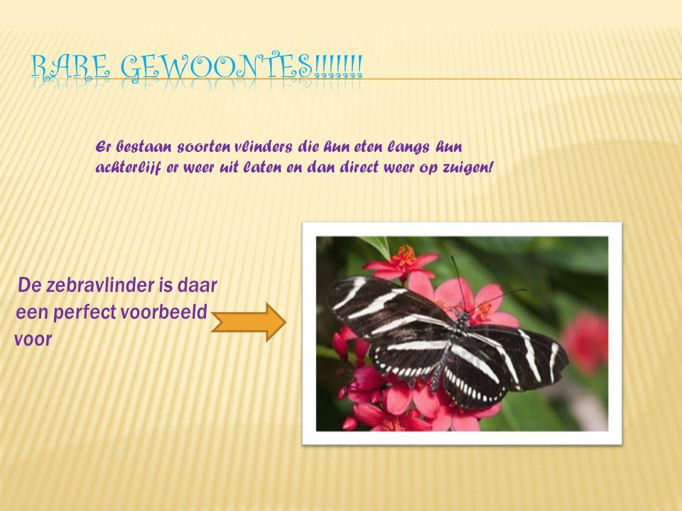Er bestaan soorten vlinders die hun eten langs hun achterlijf er weer uit laten en dan direct weer op zuigen!
