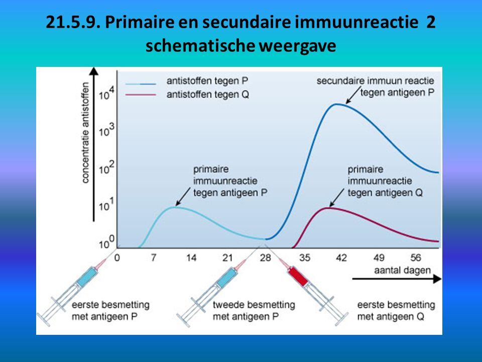 21.5.9. Primaire en secundaire immuunreactie 2 schematische weergave