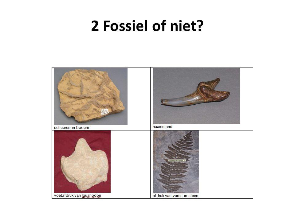 Vragen Kunnen we onderstaande als fossielen beschouwen.